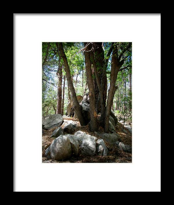 Goldwater Lake Framed Print featuring the photograph Out Of The Boulders by Aaron Burrows