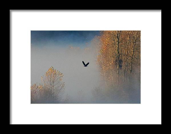Bald Eagle Framed Print featuring the photograph Out Of The Fog by Paul L