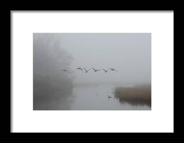 Mist Fog Atmosphere Mood Misty Foggy Weather Creek River Stream Bird Fly Flying Wing Wade Swim Tree Grass Reflect Reflection Peace Peaceful Tranquil Calm Morning Framed Print featuring the photograph Out Of The Mist by Heather Paich
