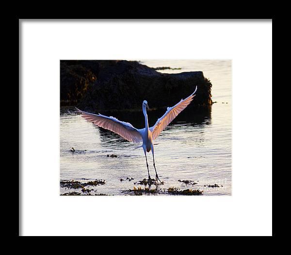 Bird Framed Print featuring the photograph Outreach by Joe Geraci
