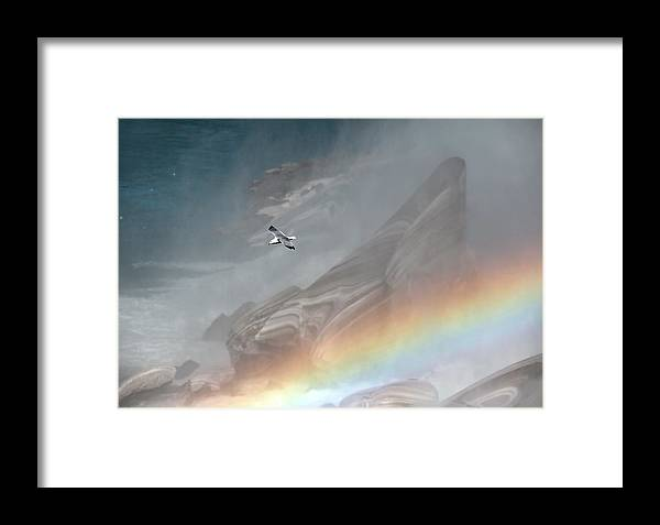 Seagull Framed Print featuring the photograph Over The Rainbow by Terry Cervi