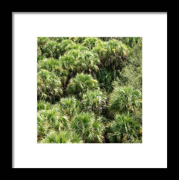 Florida Framed Print featuring the photograph Overhead View by Robert VanDerWal