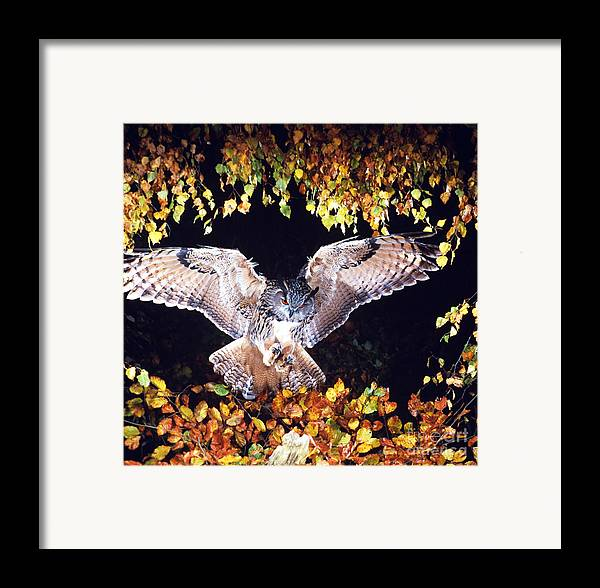 Owl Framed Print featuring the photograph Owl About To Land by Manfred Danegger