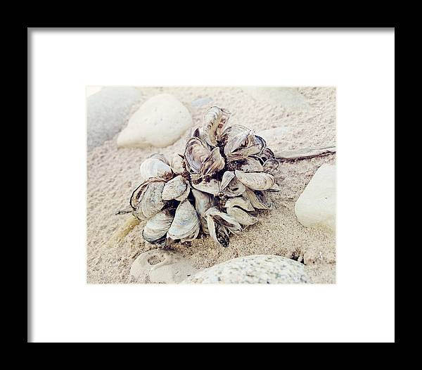Oysters Framed Print featuring the photograph Oysters by Amanda Dunlap