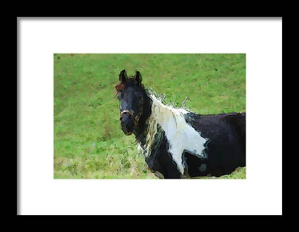 Horse Framed Print featuring the digital art Paint Horse In Field by George Ferrell