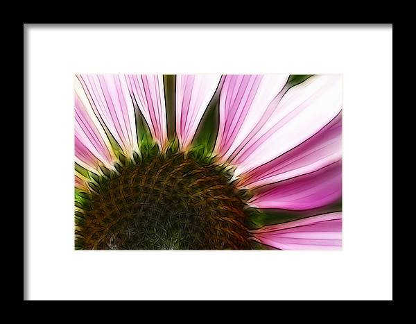 Echinacea Framed Print featuring the photograph Painted Daisy by Kathy Clark