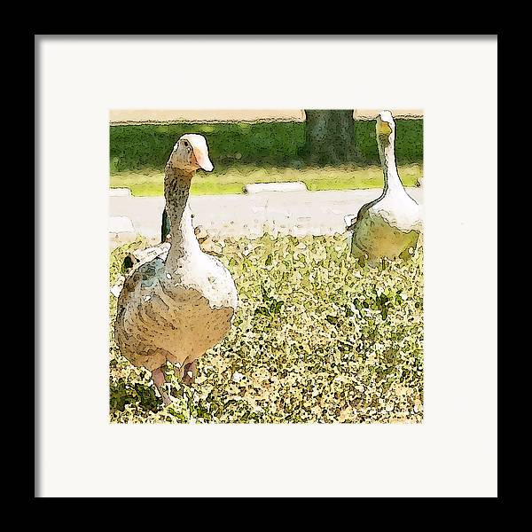 Geese Framed Print featuring the photograph Pair Of Geese by Artist and Photographer Laura Wrede