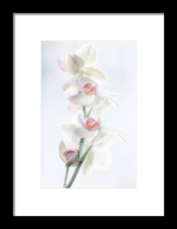 Still Life Framed Print featuring the photograph Pale Beauty by Peter Pfeiffer