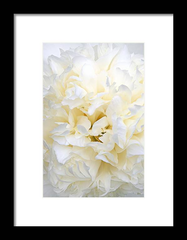 Peony Framed Print featuring the photograph Pale Peony by Leda Robertson