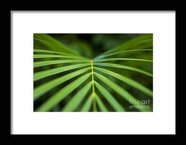 Blur Framed Print featuring the photograph Palm Leaf Pattern by Charmian Vistaunet