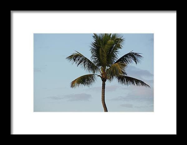 Palm Tree Framed Print featuring the photograph Palm by Scott Dovey