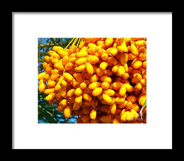 Palm Tree Framed Print featuring the photograph Palm Tree Fruit 2 by Nancy L Marshall