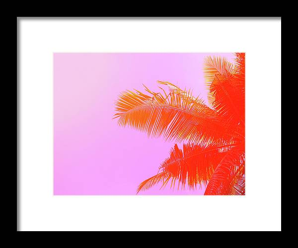 Orange Color Framed Print featuring the photograph Palm Tree On Sky Background. Palm Leaf by Slavadubrovin