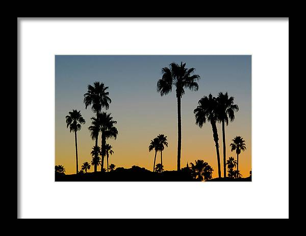 Scenics Framed Print featuring the photograph Palm Trees At Sunset by Chapin31