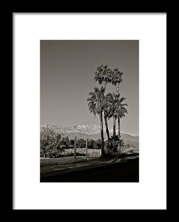Palm Trees Framed Print featuring the photograph Palm Trees in the Desert by Kirsten Giving