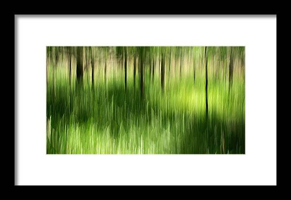Palmetto State Park Framed Print featuring the photograph Palmetto Spring by Bill Morgenstern
