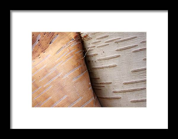 Mp Framed Print featuring the photograph Paper Birch Bark by Scott Leslie
