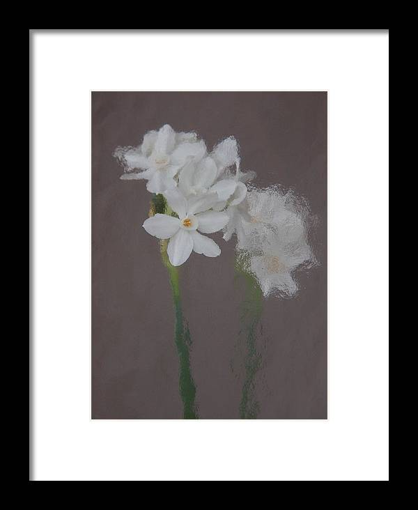 Still Framed Print featuring the photograph Paperwhites Still Life 1 by Frank Tozier