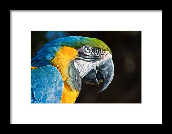 Bird Framed Print featuring the photograph Parrot Close Up by Donna Shaw