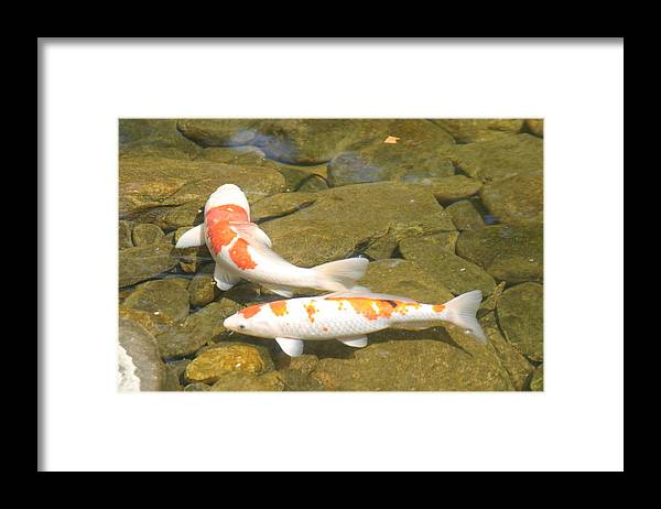 Fish Framed Print featuring the photograph Partners by Dervent Wiltshire