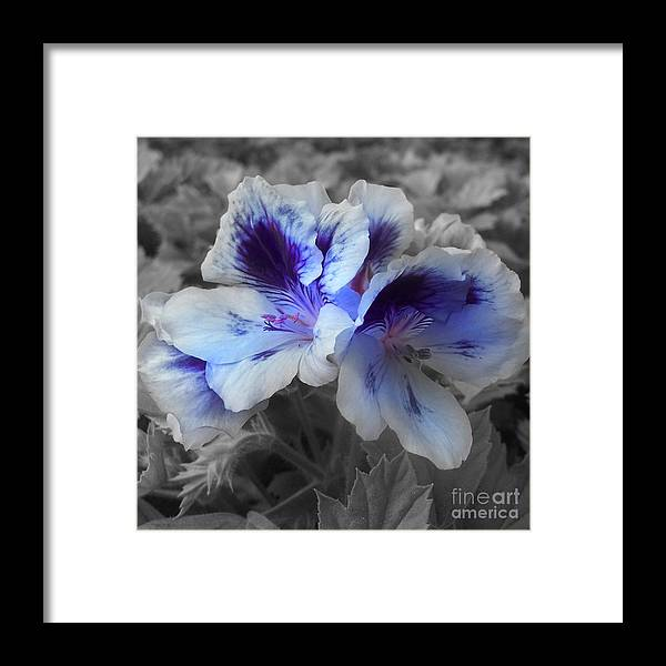 Passion Framed Print featuring the digital art Pasion Blue by Jacey Adrian