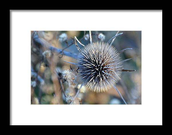 Weeds Framed Print featuring the photograph Pastoral Explosion by Kim Hymes
