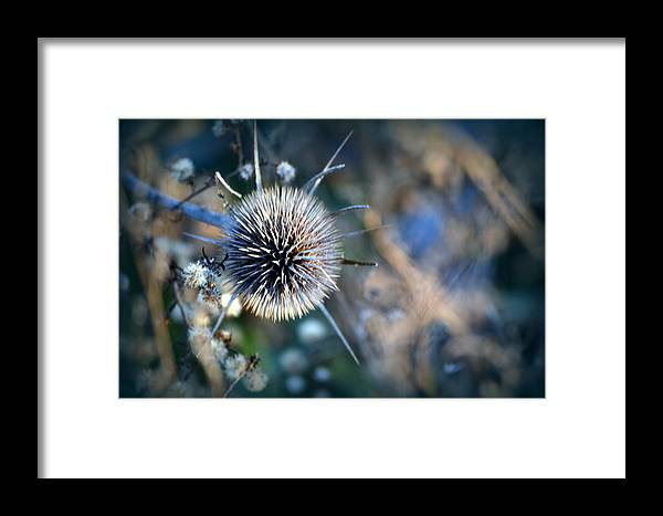 Weeds Framed Print featuring the photograph Pastoral Palette by Kim Hymes