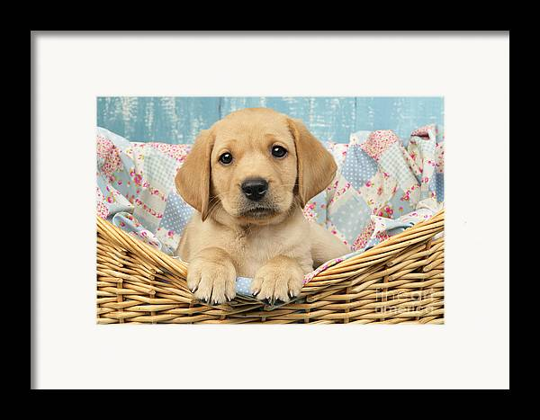Horizontal Framed Print featuring the digital art Patchwork Puppy Dp793 by Greg Cuddiford