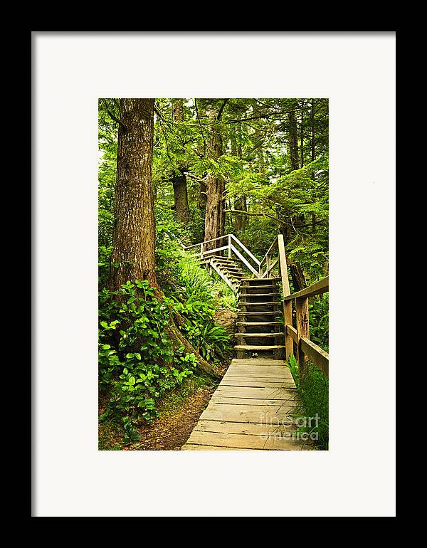 Rainforest Framed Print featuring the photograph Path In Temperate Rainforest by Elena Elisseeva
