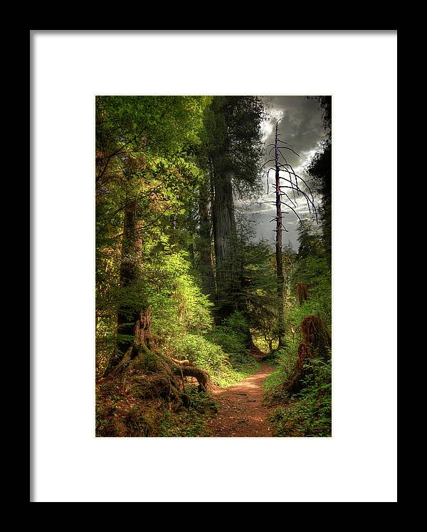Tranquility Framed Print featuring the photograph Path Through Redwood Forest by Ed Freeman