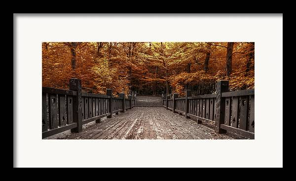 Landscape Framed Print featuring the photograph Path To The Wild Wood by Scott Norris