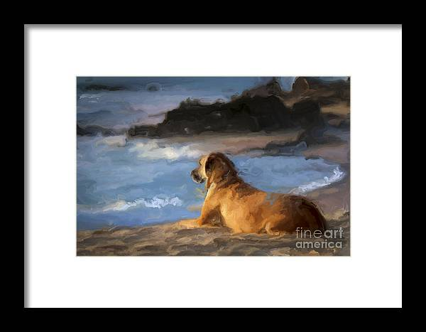 Dog Framed Print featuring the photograph Patient Loyalty by Richard Mason