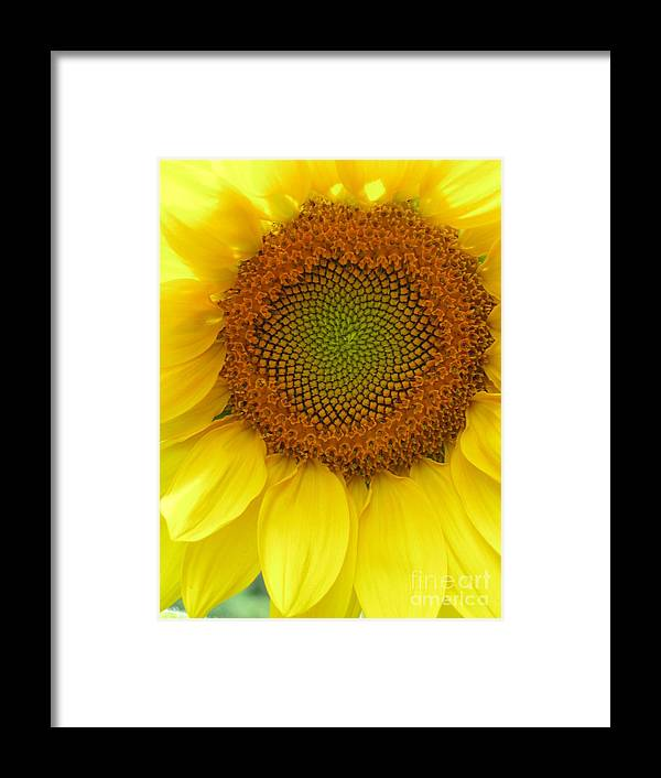 Sunflower Framed Print featuring the photograph Patterns Of Nature by Laura Corebello