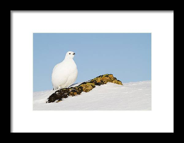 Adult Framed Print featuring the photograph Pausing On A Boulder by Tim Grams