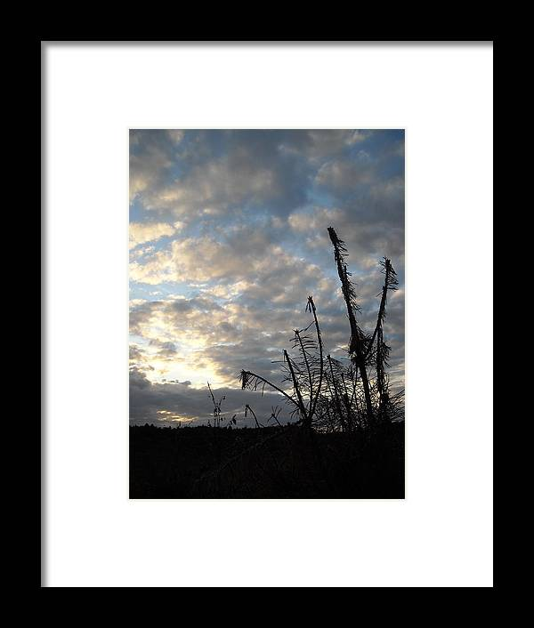 Silohette Framed Print featuring the photograph Paws by Christopher Easthall