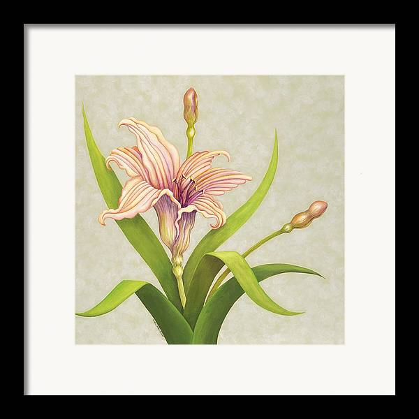 Soft Peach Lily In A Pose Framed Print featuring the painting Peach Lily by Carol Sabo