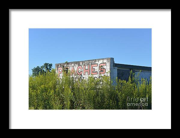 Americana Framed Print featuring the photograph Peaches by Joseph Perno