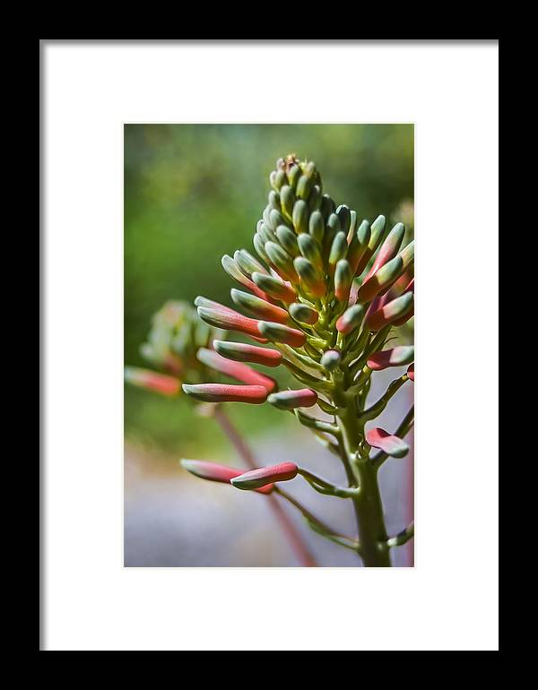Flowers Framed Print featuring the photograph Peachy Sunshine by Carolyn Marshall