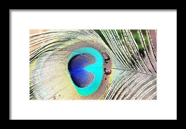 Peacock Framed Print featuring the pyrography Peacock Feather by Leaha Phillips