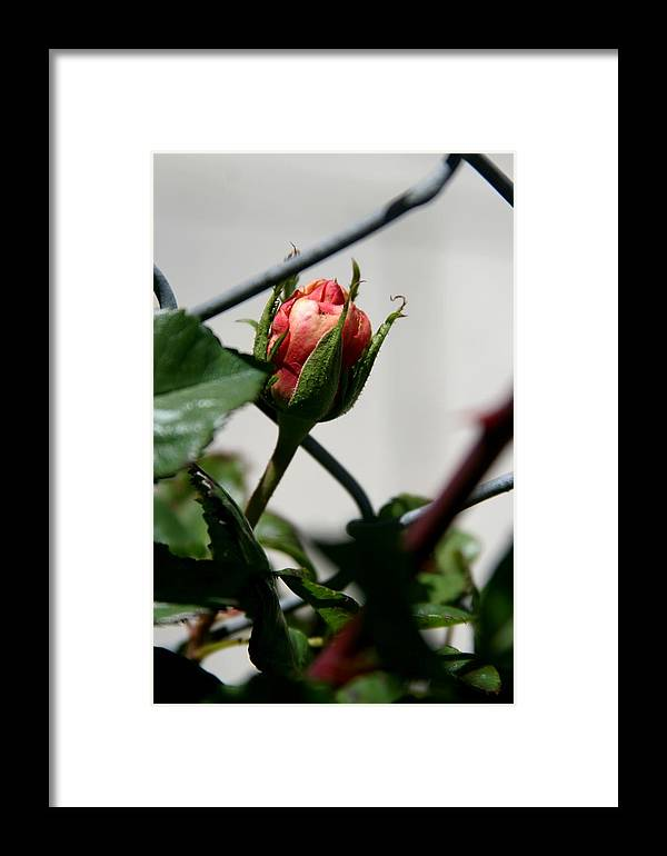 Peaking Out Framed Print featuring the photograph Peaking Out by Becca Wilson