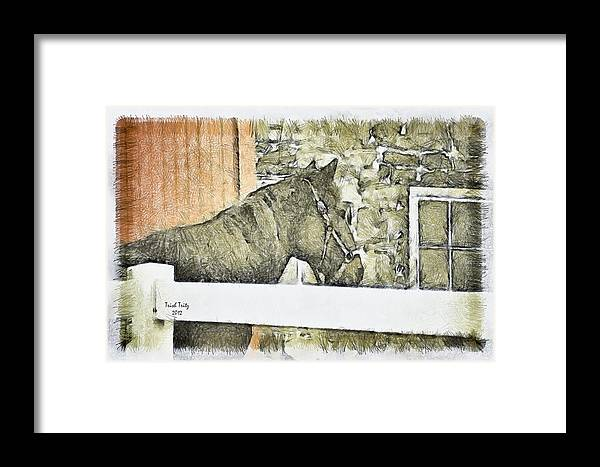 Horse Framed Print featuring the photograph Peanut by Trish Tritz