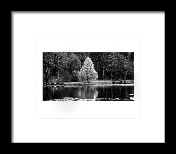 Pear Tree Framed Print featuring the photograph Pear Tree by Jerry Cook