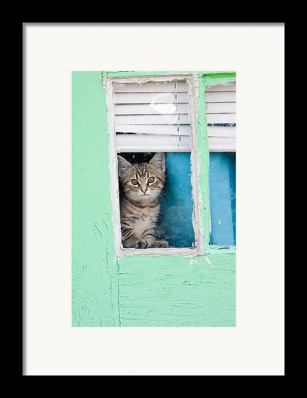 Kitty Framed Print featuring the photograph Peek-a-boo by Jean Haynes