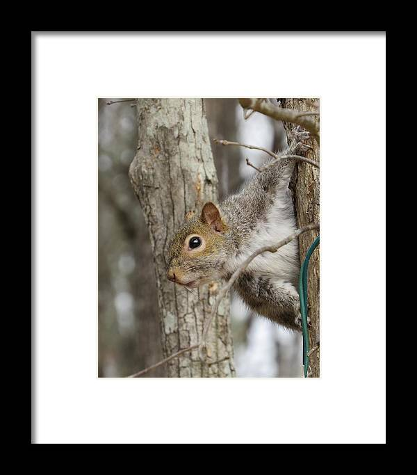 Squirrel Framed Print featuring the photograph Peek A Boo by Lori Bourscheid