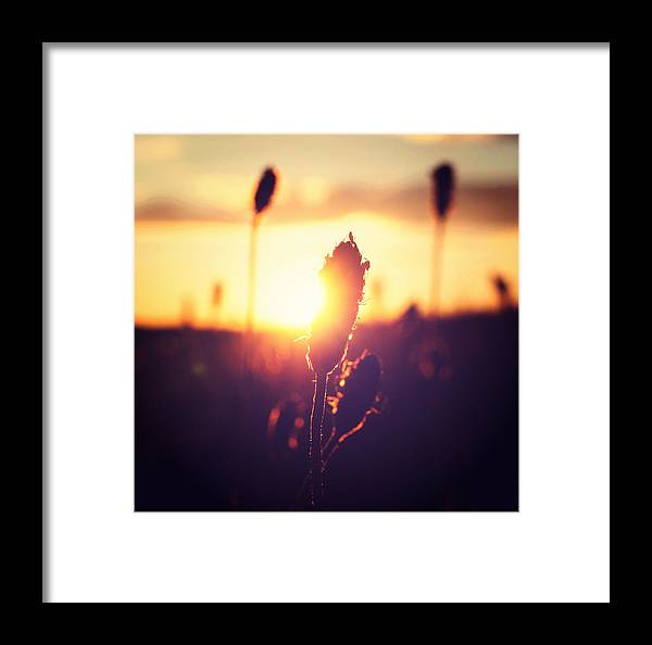 Retro Framed Print featuring the photograph Peeking Through by Patrick Horgan