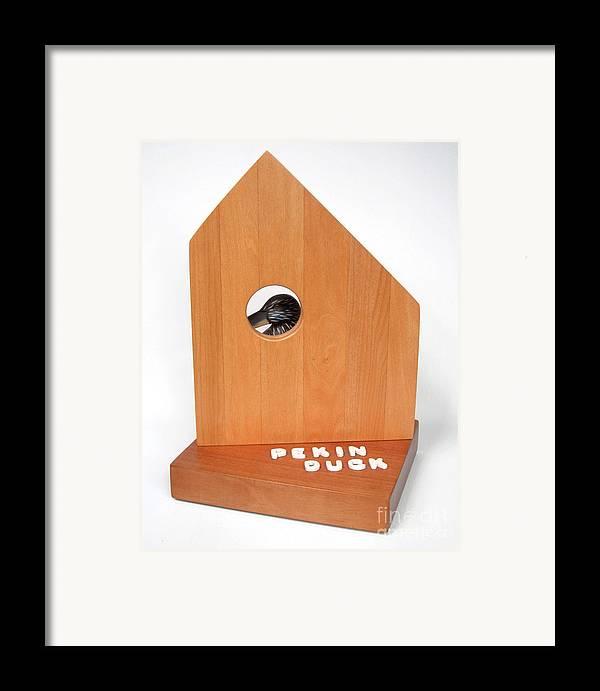 Duck Framed Print featuring the sculpture Pekin Duck #99 by Bill Czappa