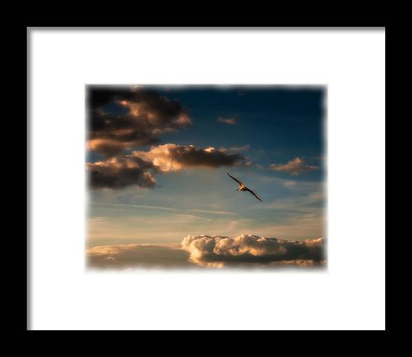 Florida. Fl Framed Print featuring the photograph Pelican Flight by Michael Schwartzberg