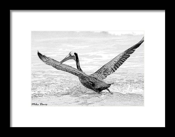 Pelican Framed Print featuring the photograph Pelican Moment by Michael Davis