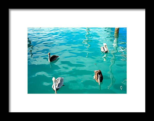 Pelicans Framed Print featuring the photograph Pelicans by Armani Ballesteros
