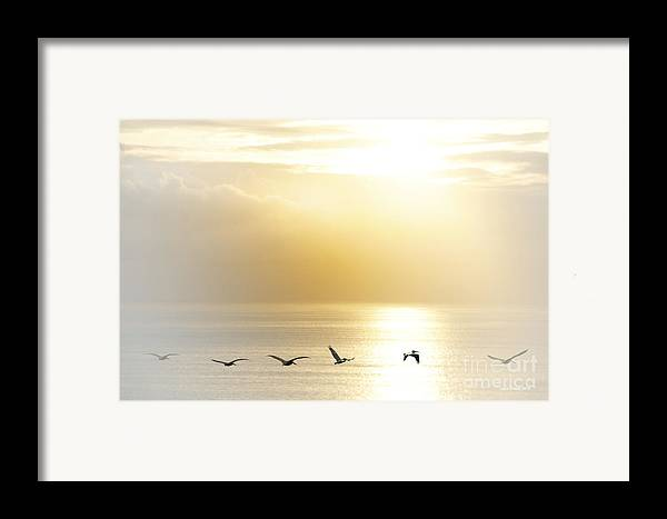 Pelican Art Framed Print featuring the photograph Pelicans Over Malibu Beach California by Artist and Photographer Laura Wrede